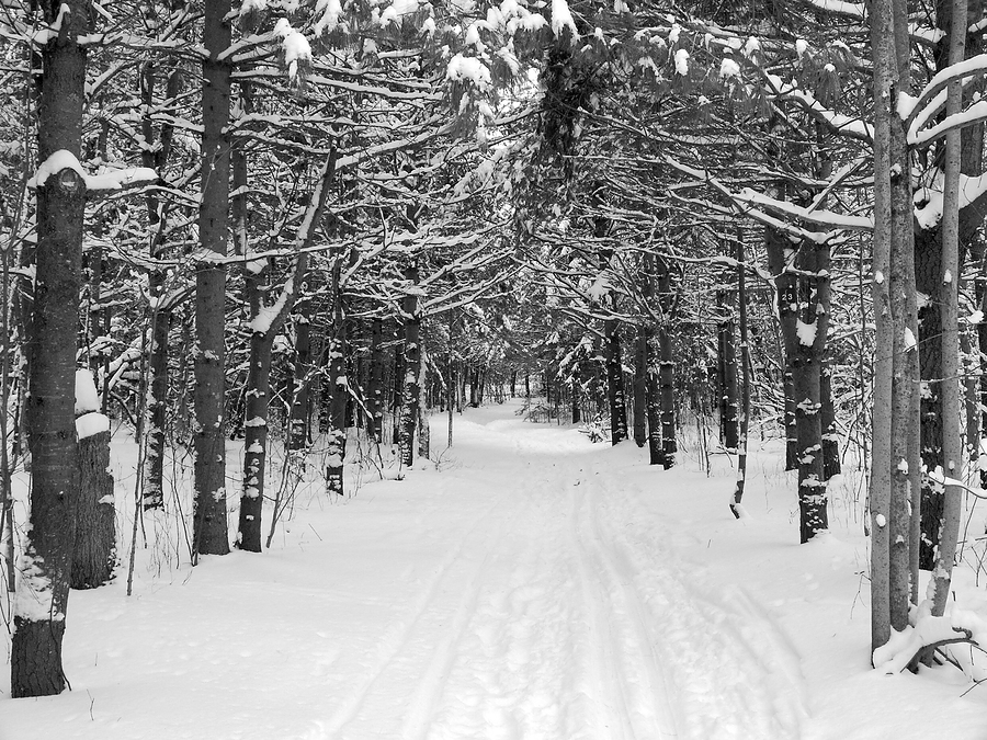 analysis robert frost s old man s winter night One of the best poets of all time, robert frost's 'after apple-picking' is among his most accomplished works buzzle provides you with a summary and analysis.